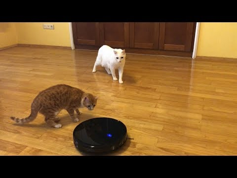 Cats vs Robot Vacuum Cleaner (Hilarious)