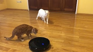 Two cats and one common enemy