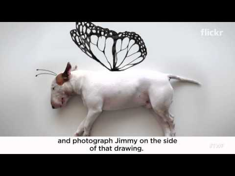 How a dog named Jimmy became a fashion icon