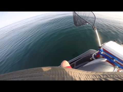 Offshore jet ski fishing - Sharks, Snappers, Grunts
