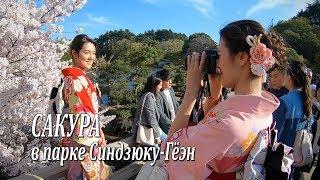 Прогулка по токийскому парку Синдзюку-Гёэн в период цветения сакуры
