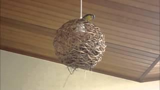 Pequenos pássaros *-*