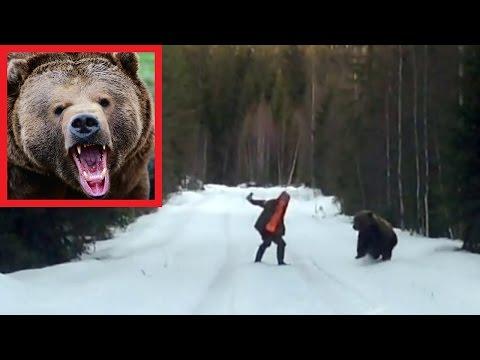 Отпугнуть медведя!!! Наглядное пособие по выживанию