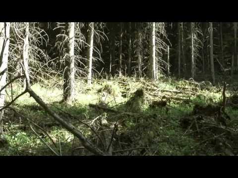 Csomád-Bálványos Natura 2000 terület dokumentumfilm