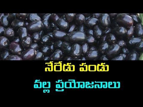 Neredu Pandu Benefits In Telugu | Neredu Pandu | Neredupandu | Jamun Fruit | Media Poster