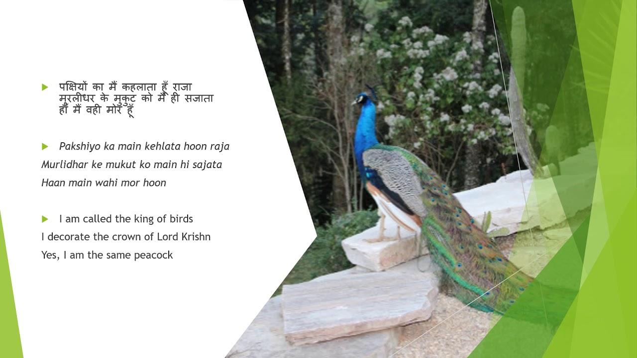 Hindi Poem on Birds | Hindi Poems|हिंदी कविता
