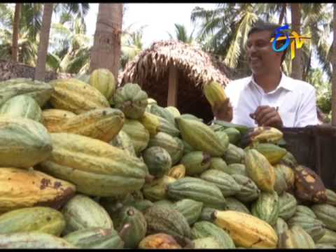 Success story of Cocoa farmers in AP