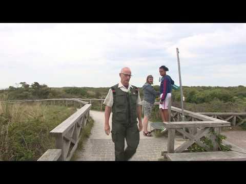 Slecht broedseizoen voor lepelaar op Waddeneilanden