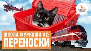 какие бывают переноски для кошек? - Школа
