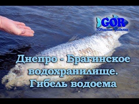 Днепро Брагинское водохранилище. Гибель водоема