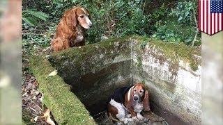 Верная собака неделю просидела рядом с подругой, попавшей в беду