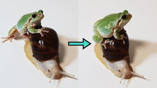 "Frog riding a snail ""It's super fast!"""