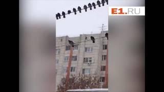 """""""Голубиная гирлянда"""" украсила перед Новым годом одну из улиц Екатеринбурга"""