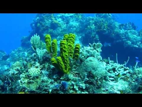 Diving Cozumel Reefs W/ Best Cozumel Diving Trips By Cozumel Cruise Excursions