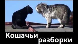 Кошачьи разборки Смешные кошки. Жизнь в природе.  Жизнь в деревне.