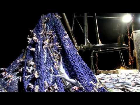 Hoki Trawlers