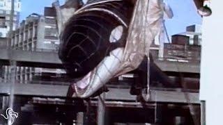 Georgia Aquarium Stops Capturing Wild Whales And Dolphins
