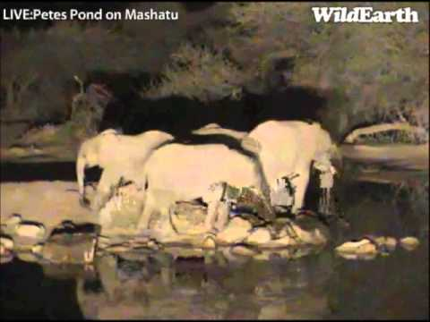 Part 1 of the Elephant's at the Pond around 8:35pm  07 21 2013