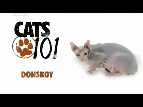 Донской сфинкс 101kote.ru Donskoy 101cats