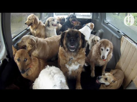 Joe Daily - Here Comes the Doggie School Bus!
