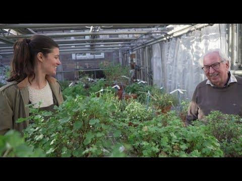 Pelargonium (Geranium) Tour With Hortus Botanicus — Plant One On Me — Ep 076