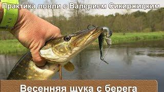 Весенняя щука с берега : Практика ловли с Валерием Сикиржицким