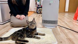 子猫に電気ヒーターを買ってあげたら暖かすぎて離れられなくなってしまいましたw