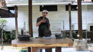 Bonsai basic 4: Rock cascading or root o...
