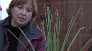 Gardening Tips & Flowers : How to Remove Brown Tips From the Leaves of Houseplants