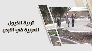 تربية الخيول العربية في الأردن