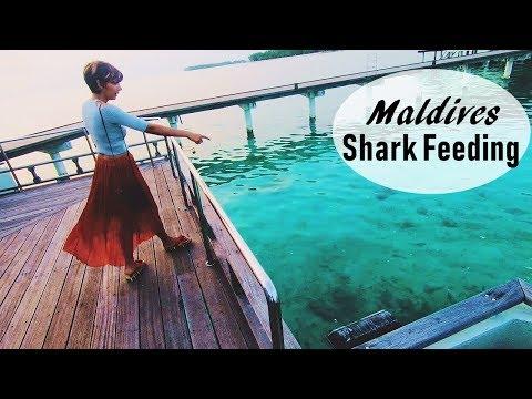 Shark Feeding - Maldives Travel | World Ghoomo