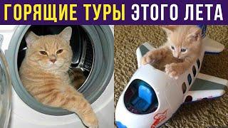 Приколы с котами. Горящие туры по квартире | Мемозг #256
