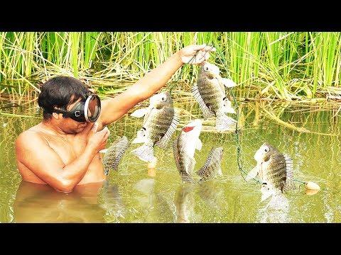 Pescando Grandes Tilapias Con Trasmallo