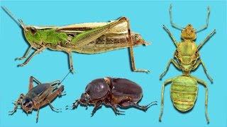 Mediakraft Ekibi Bu Böcekleri Yedi