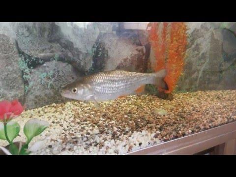 ловля рыбы в аквариуме