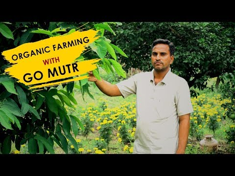 ORGANIC FARMING WITH GO MUTR  IN TELANGANA | PANI PURI APPLE |  A SUCCESS STORY OF BALAJI