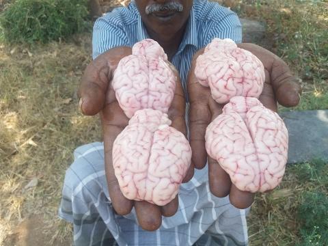 Cooking Goat Brain Fry in My Village - My Village Food
