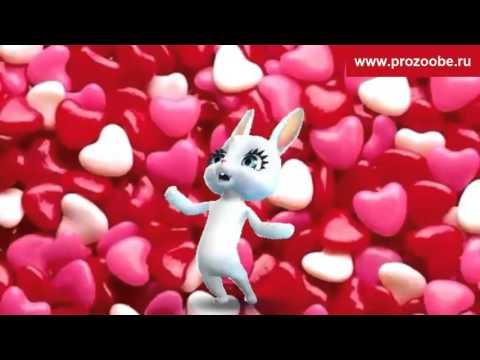Поздравление День святого Валентина - Поздравления с Днем влюбленных от Зайки Домашней Хозяйки - Ржачные видео приколы