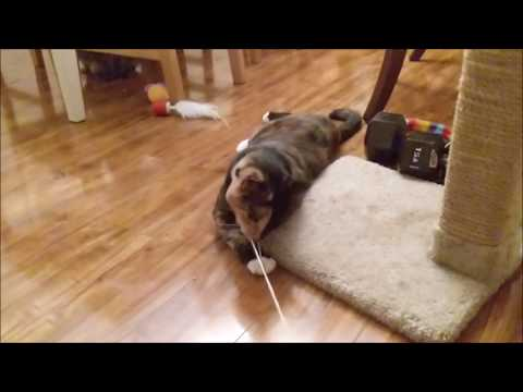 Kittens Playing With Yarn!!!