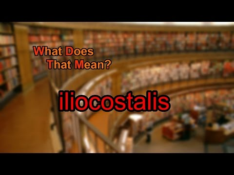 What does iliocostalis mean?