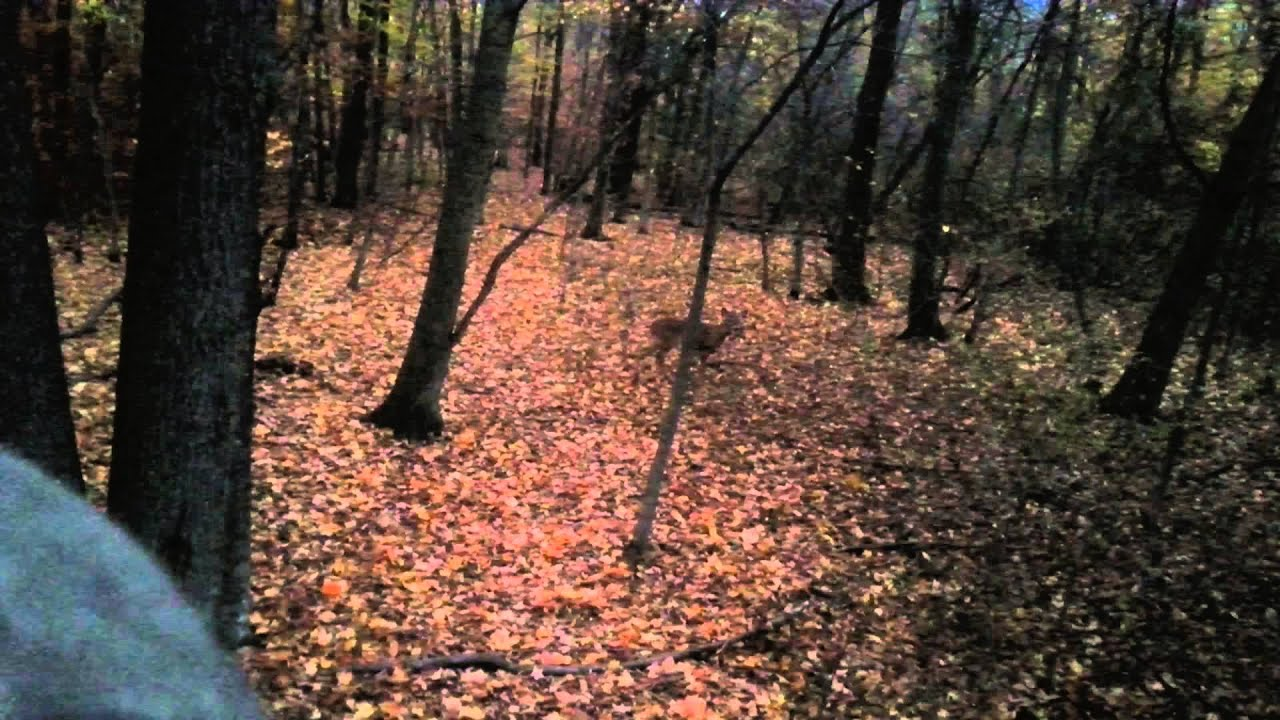 A doe a deer a female deer youtube a doe a deer a female deer hexwebz Image collections