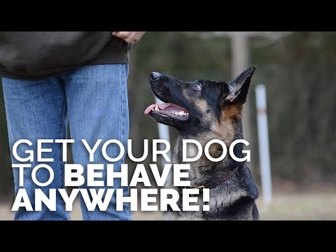 How to Get Your Dog to BEHAVE ANYWHERE! - Training Environments