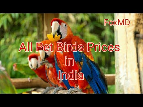 All Pet Birds Prices In India   2018 List