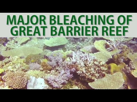 Major Bleaching of Great Barrier Reef