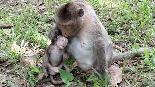 Why doesn't Mom monkey want to breastfeed her baby?