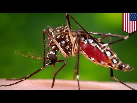 Zika virus: six ways to protect yourself against the dreaded virus - TomoNews