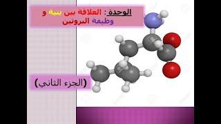 الوحدة الثانية: العلاقة بين بنية و وظيفة البروتين (الجزء 2 )