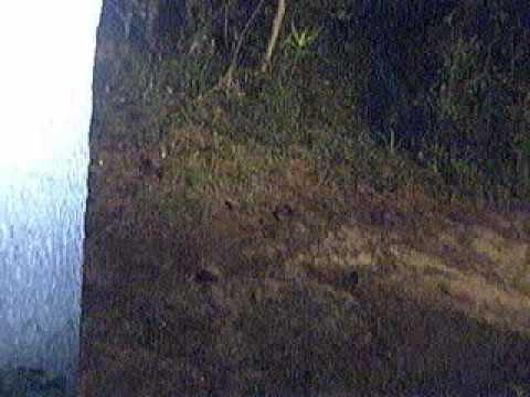 nino fantasma captado en video detrasde mi casa