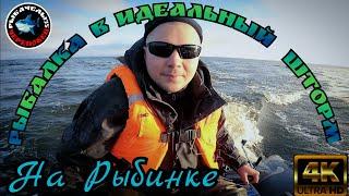 Рыбалка в 4к на Рыбинском Водохранилище Ловля Щуки и Судака в Сентябре2021