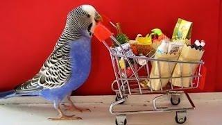Funny parrots!Прикольные попугайчики!